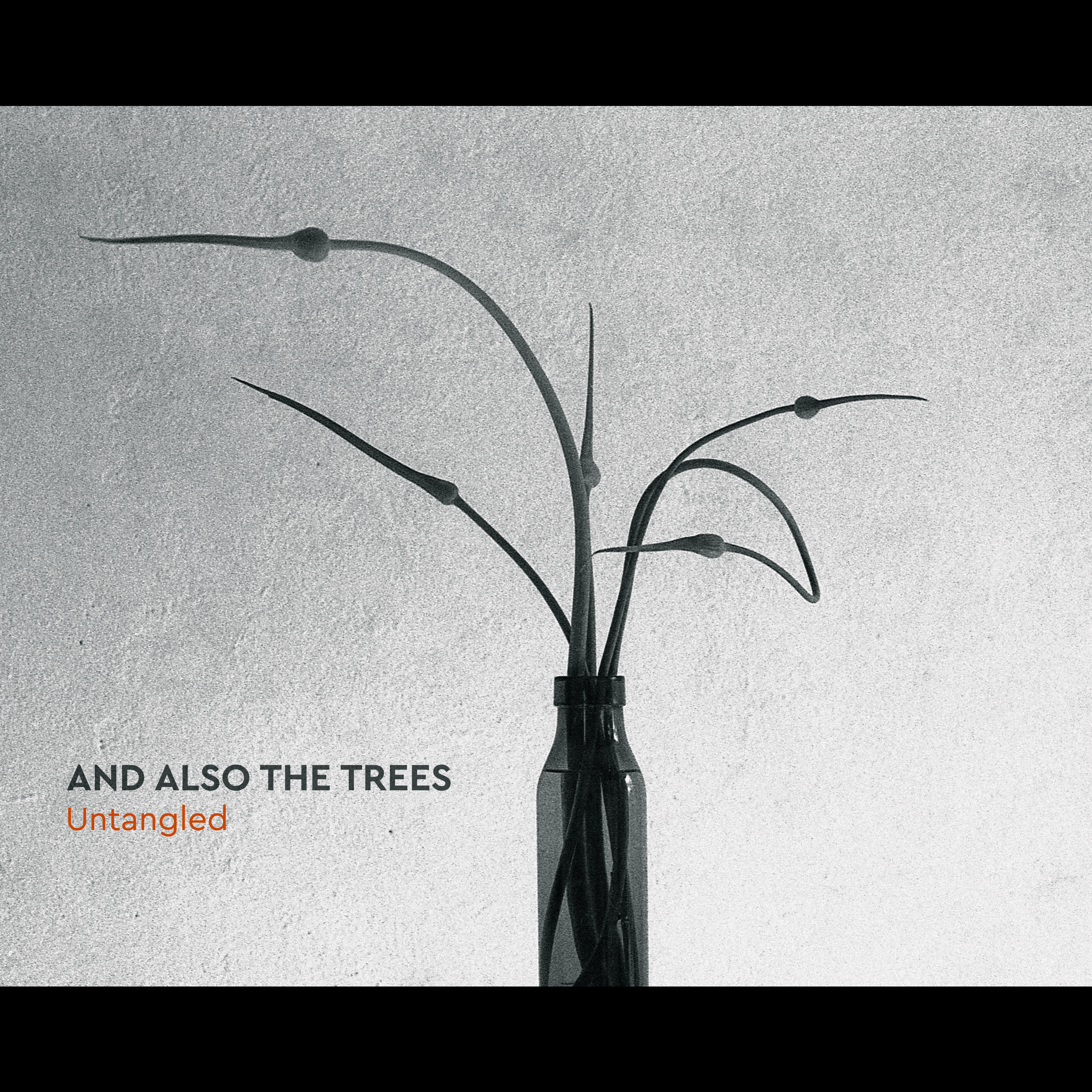 And Also The Trees - Untangled